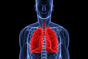 Трансплантация органов в Медицинском Центре им. Рабина