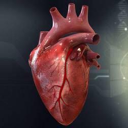 в Израиле напечатали сердце на 3D принтере